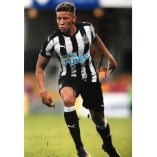 """Dwight Gayle Hand Signed 12x8"""" Photograph"""